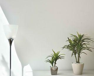 観葉植物の癒し効果