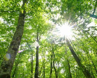 森林浴の癒し効果